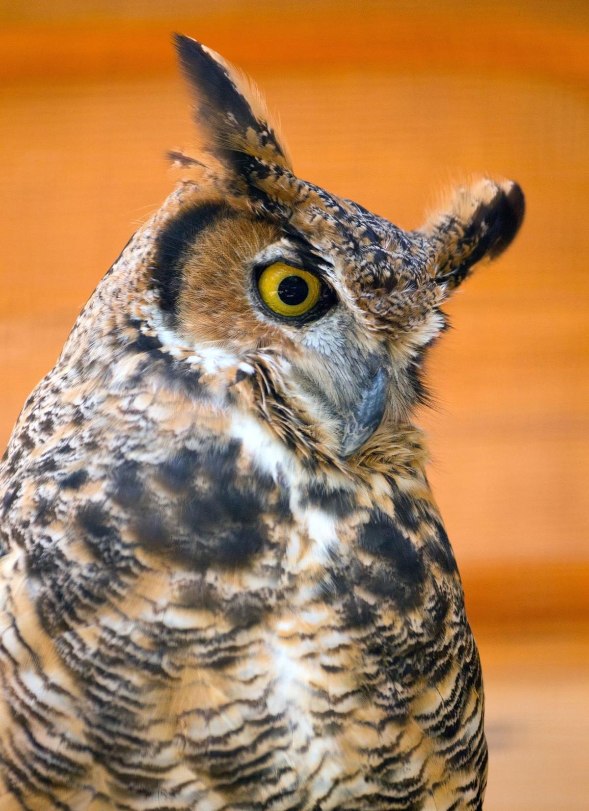 at fontenelle forest u0027s new raptor woodland refuge expect face to