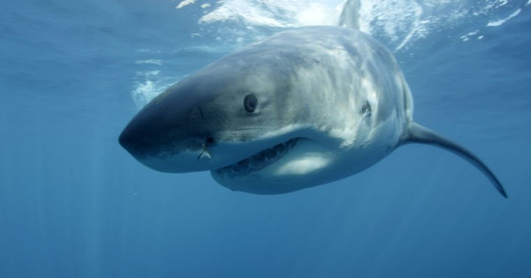 Discovery hammered for 'Megalodon' special