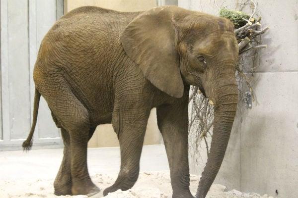 elephantnew.JPG