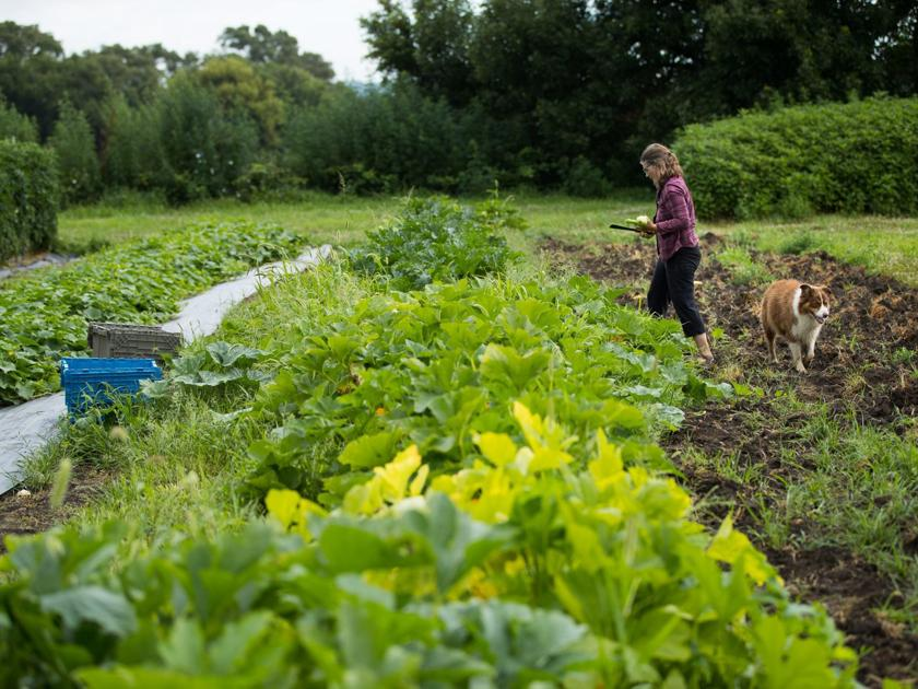 One of city's most popular organic farms to bid farewell