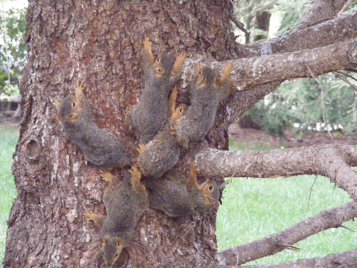 Tangled squirrels