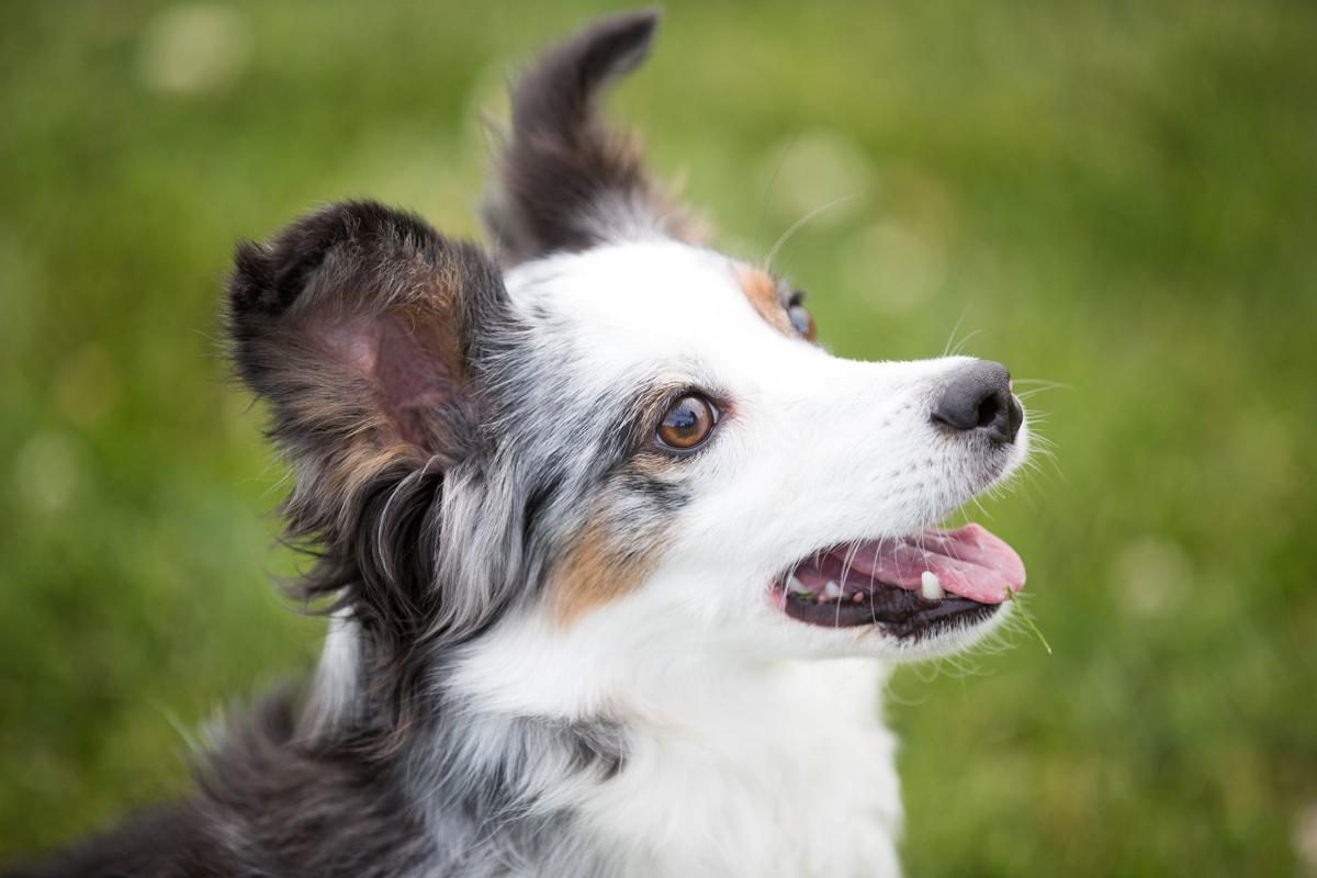 Omaha dog Pixel zips through agility course to win