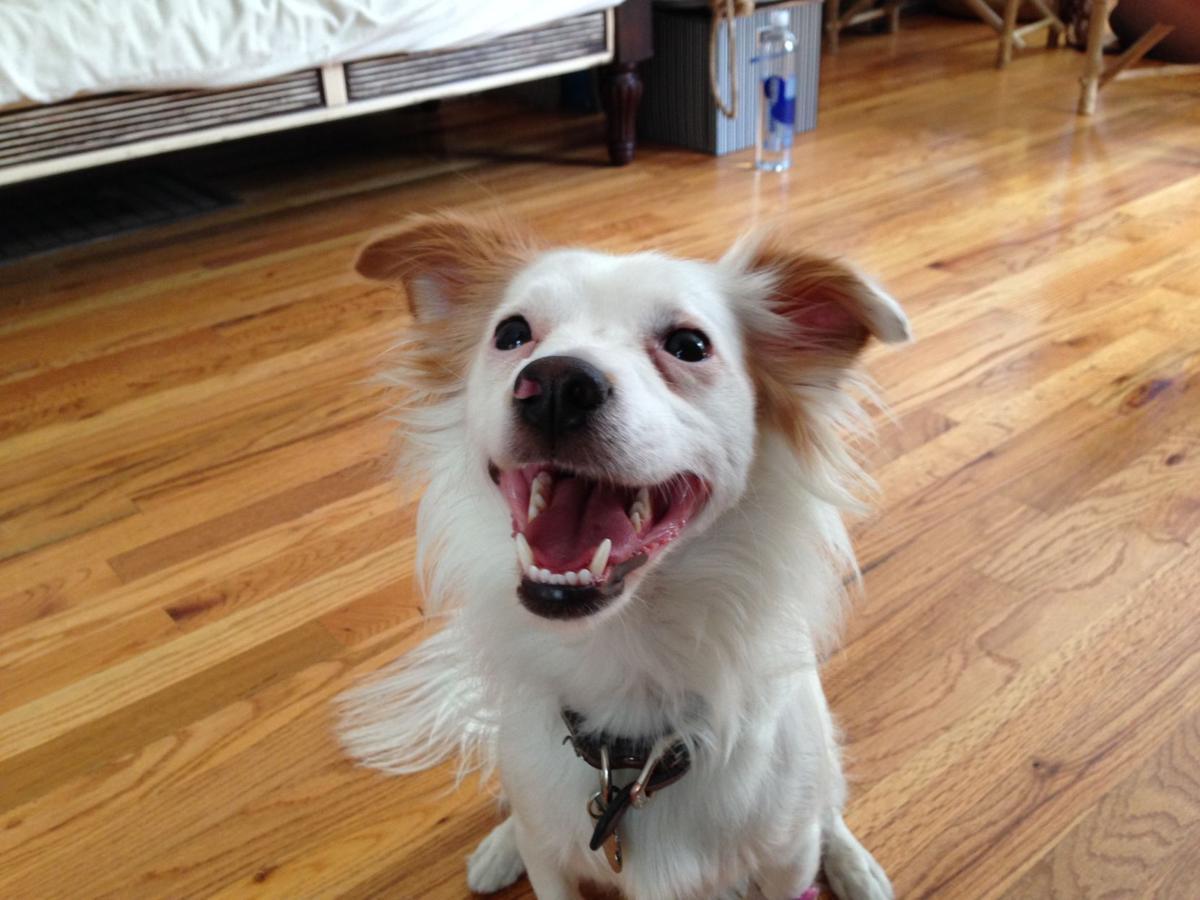 Dog Urine Sns Out Of Hardwood Floors Carpet Vidalondon