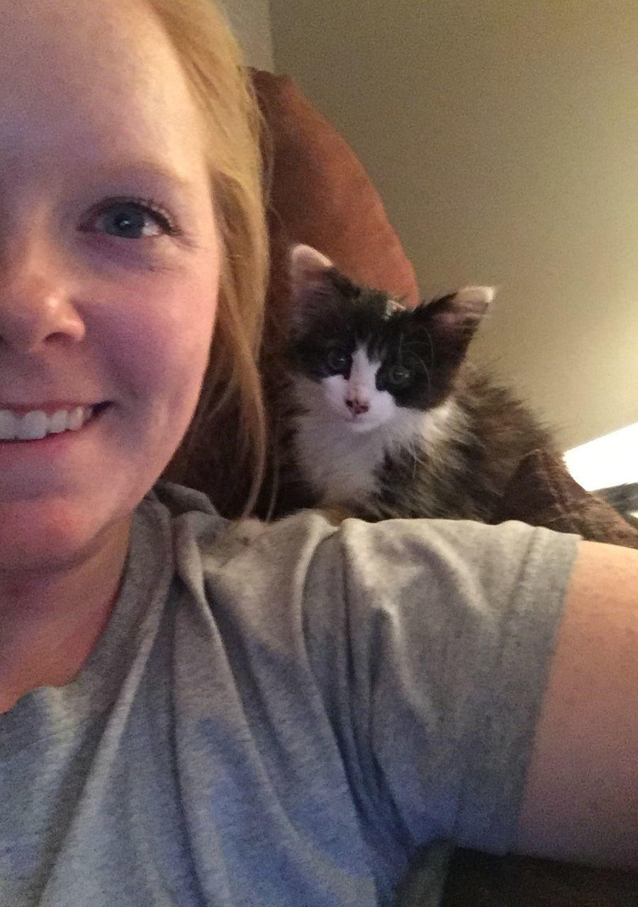 Tumbles the kitten