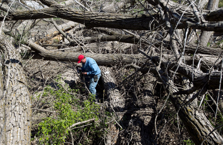 Nebraska's state tree comes under threat