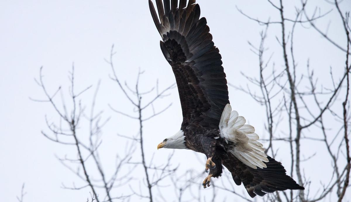 Singles in eagle nebraska