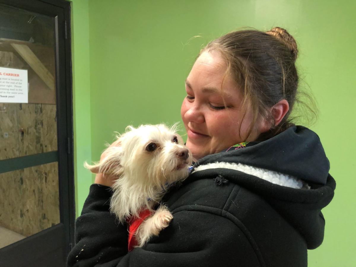 Dog stolen in Des Moines is found wandering in Omaha