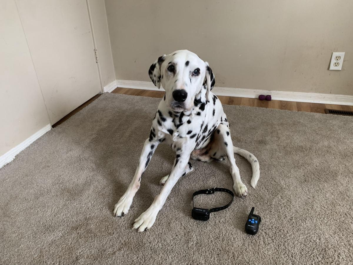 Dog for 6/19/19