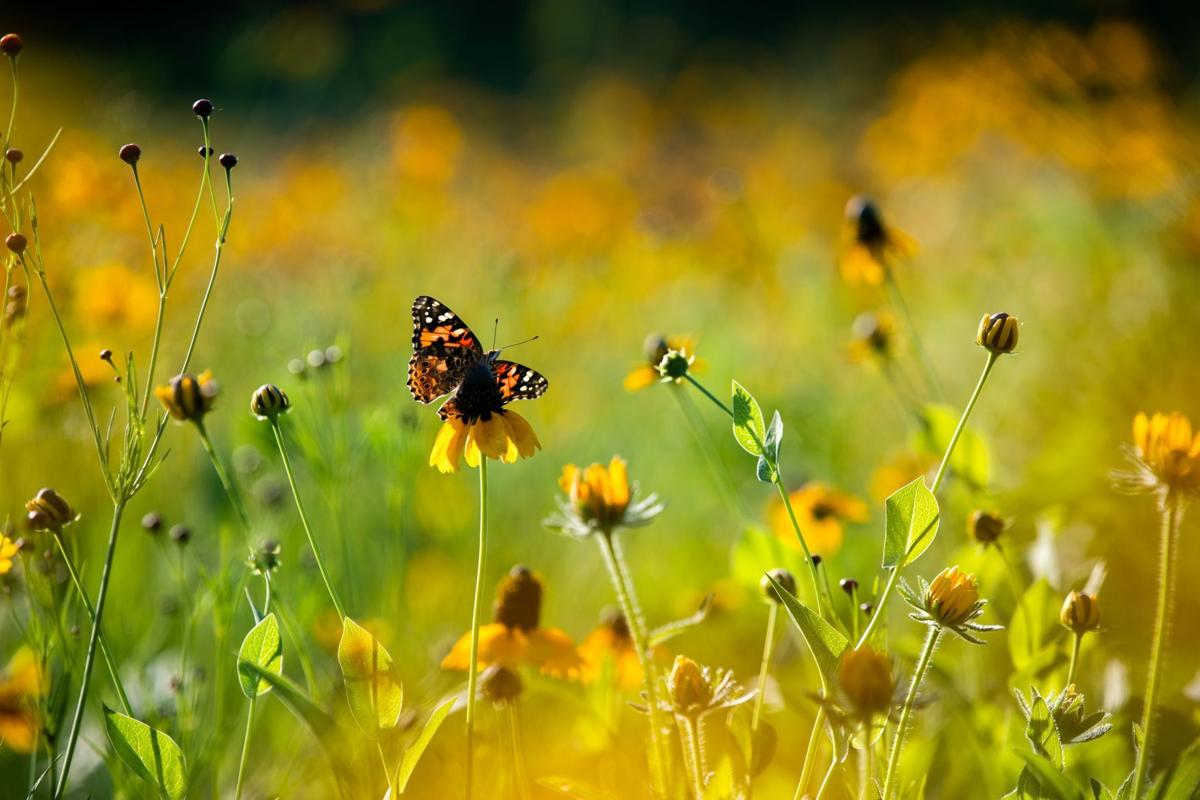 20190706_liv_wildflowersBJS03