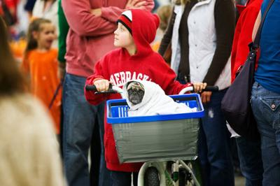 Ahead of Halloween, pugs get dressed in festive ensembles