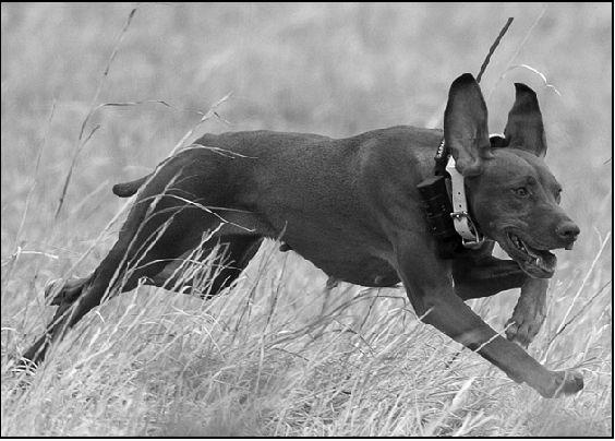 GPS collars help hunters keep track of their dogs