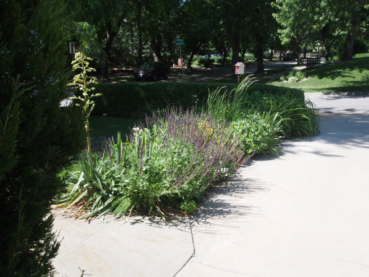 Wildflower gardens