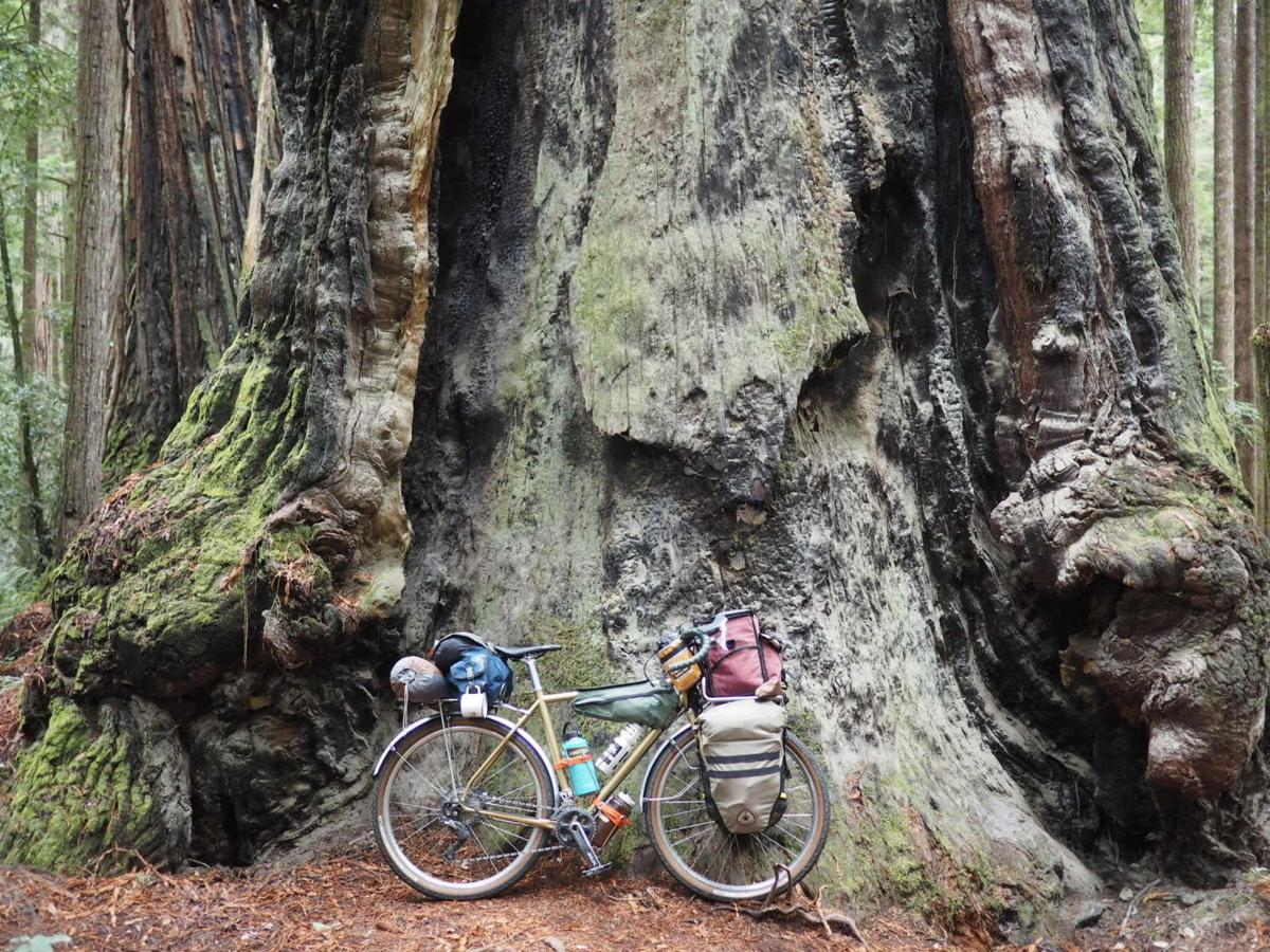 bikepackingbigtree