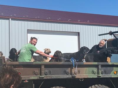 Kennel owner saves all dogs in his care: 'I give them my word that these dogs are going to be safe'