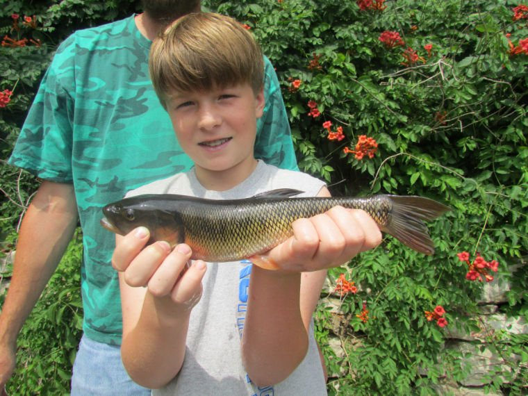 9-year-old, dad break record for creek chub | Sports ...