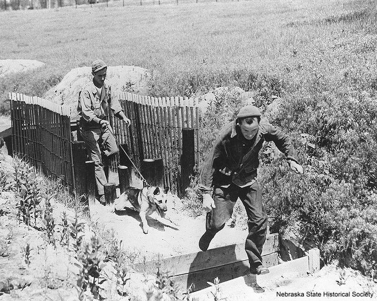 History Nebraska WWII photo - K-9 Corps