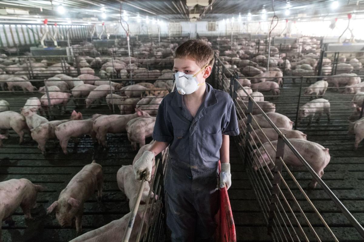 Ag Groups Push For Expansion Of Nebraska S Livestock