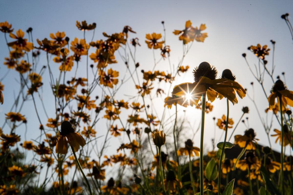 20190706_liv_wildflowersBJS06