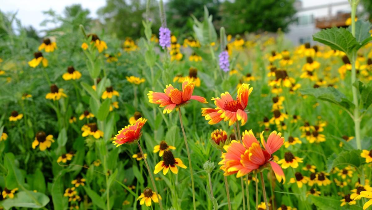 wildflower field(10)