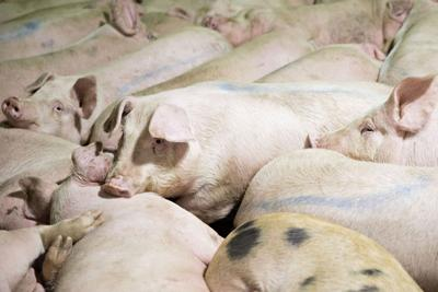 Chinese-owned pork producer qualifies for money under Trump's farm bailout