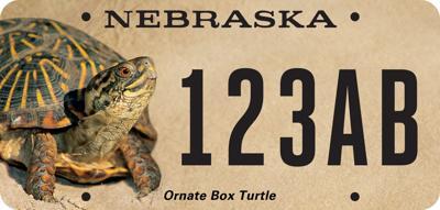 Turtle-License-Plate-mockup (copy)