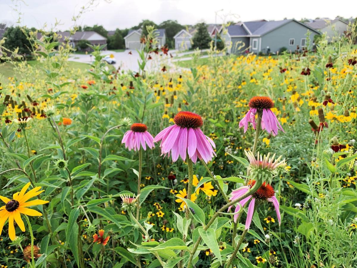 wildflower field(3)