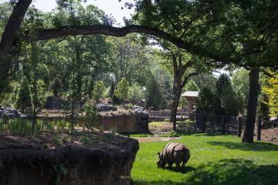 What's new at the zoo? Here's a handy-dandy field guide