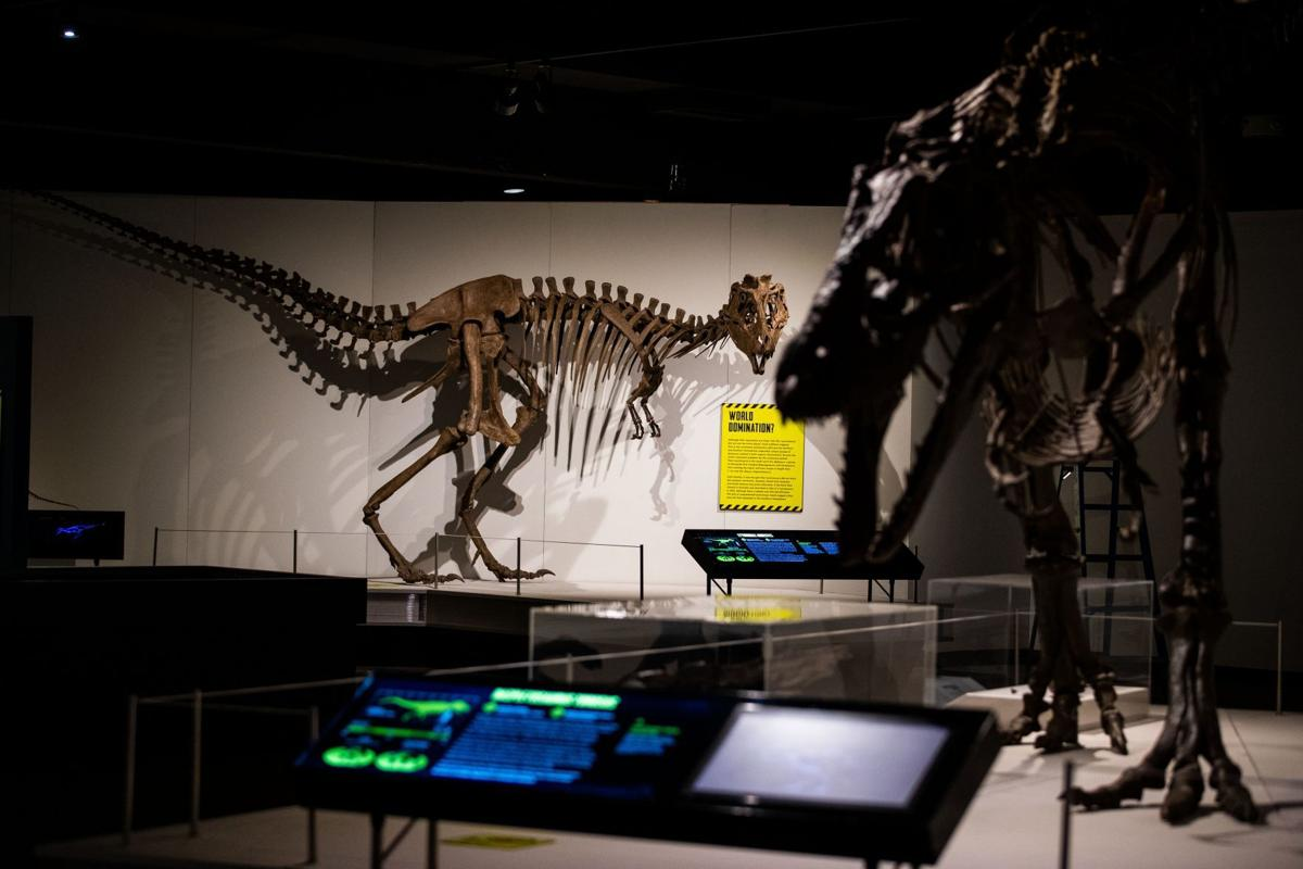 Replica of 'Scotty,' the largest T  rex ever discovered, is