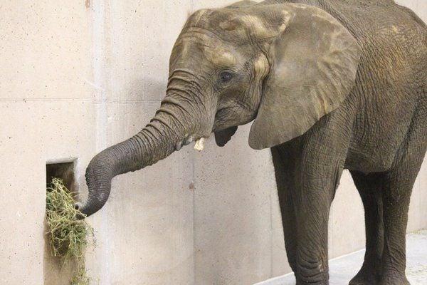 Elephant new
