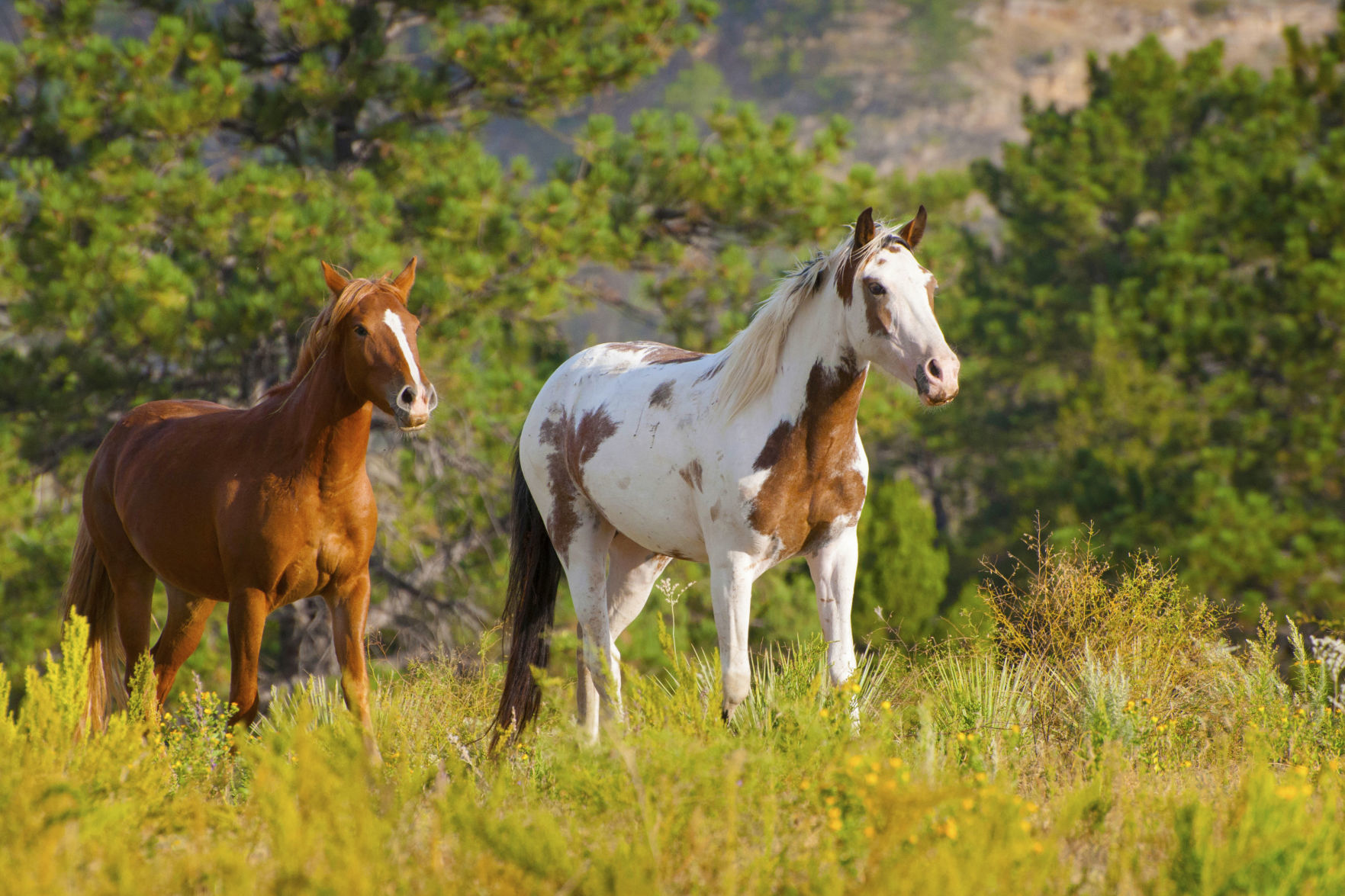 When Wild Horses And Beautiful Scenery Meet It S Hard To Leave Special Sections Omaha Com