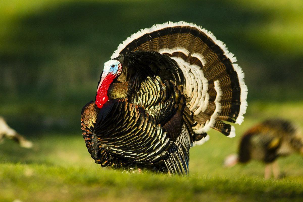 20201103_new_thanksgiving