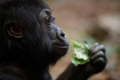 20180412_liv_zoofood_pic15
