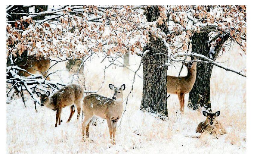 Prevent deer-car crashes during peak season
