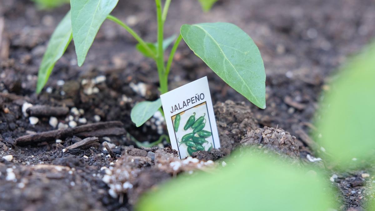 plantagarden(4)