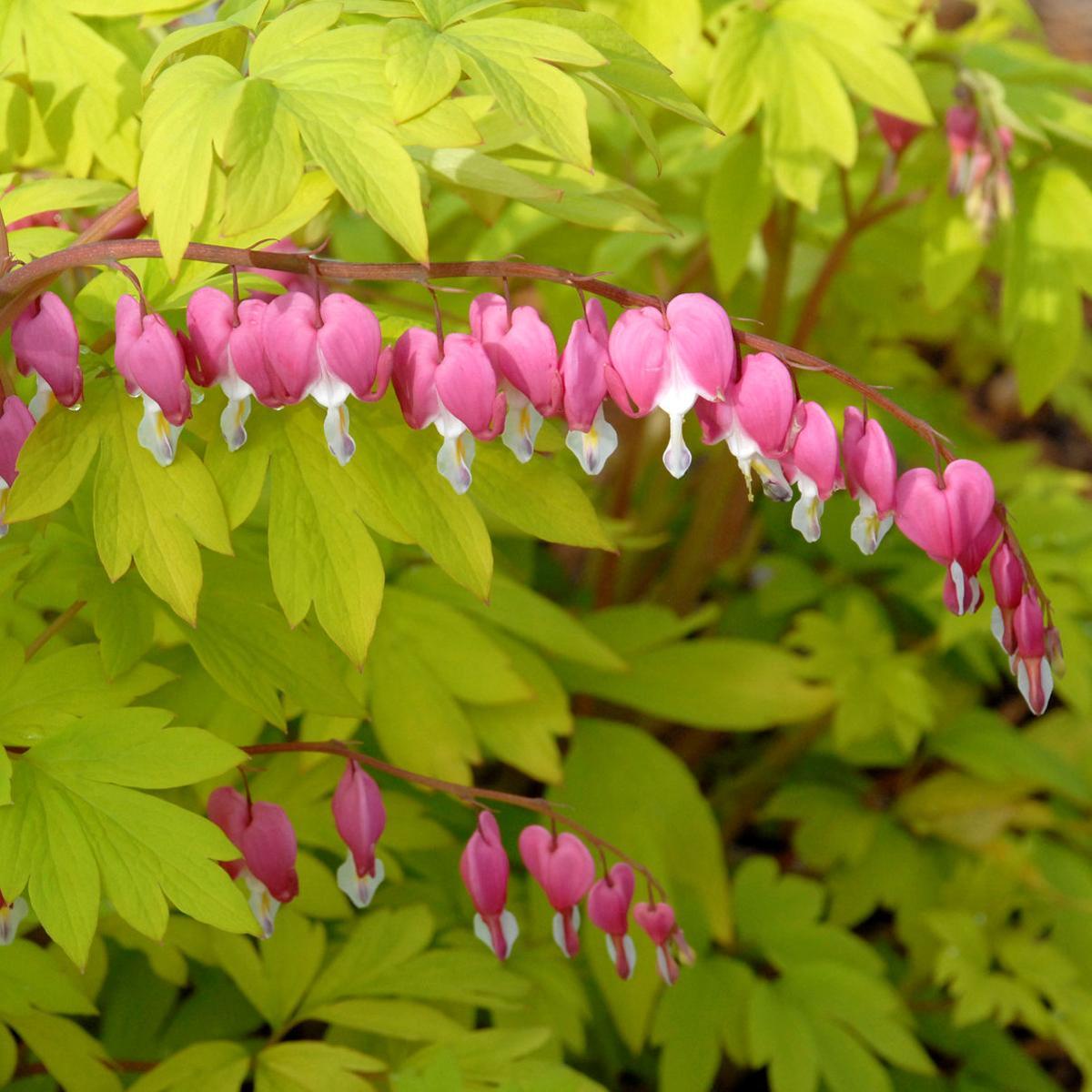 Riggenbach Odd Shaped Flowers Delight Living Omaha