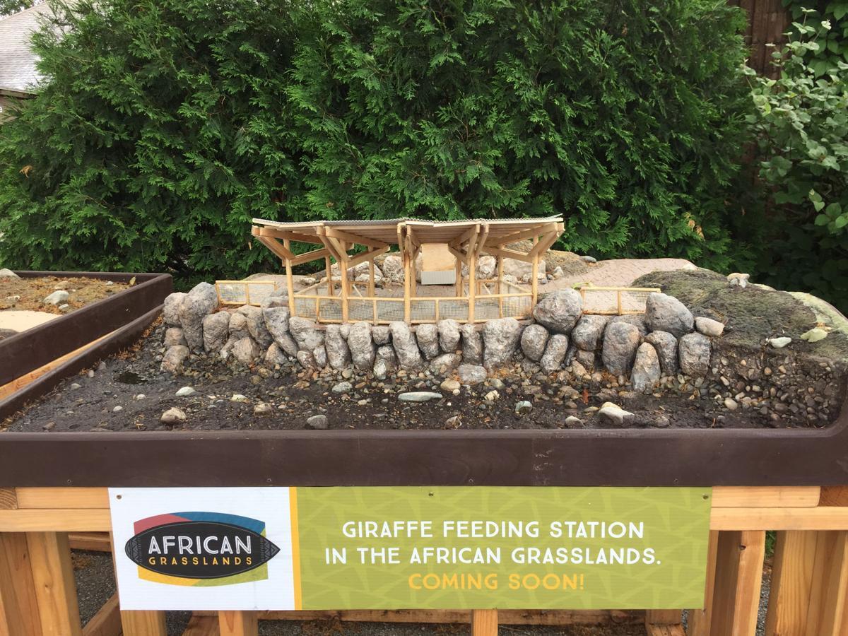 Zoo_Grasslands_GiraffeFeedi.jpg