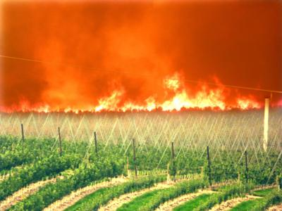 Gebbers continues with harvest, fruit packing despite fires