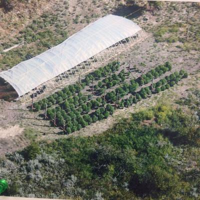 Police seize 646 pot plants in Waterville bust