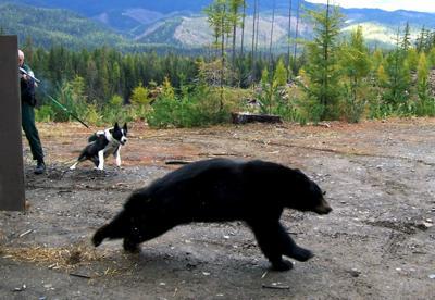State's first Karelian bear dog retiring