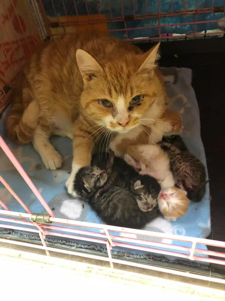 mama with kittens