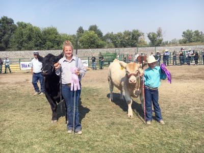 top steers