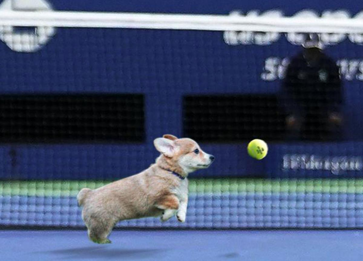 US Open joes about adding puppies to ballperson teams