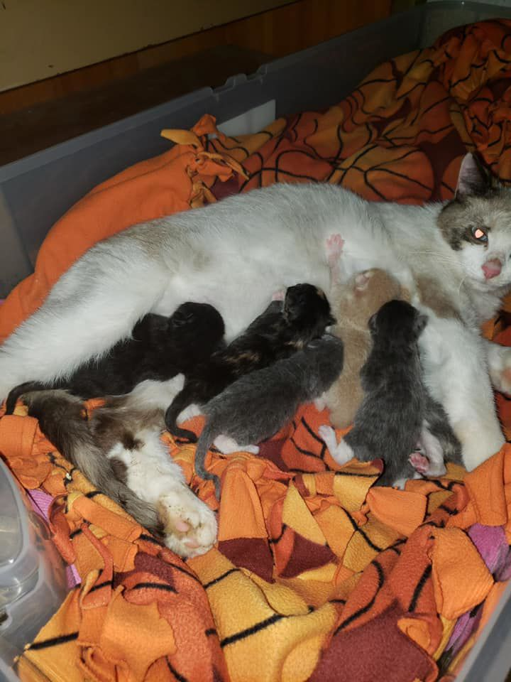 Roxy and kittens