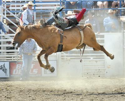 Stampede draws top cowboys