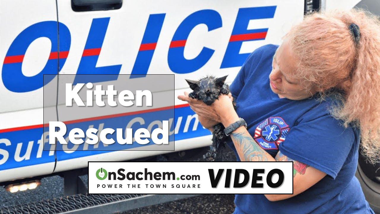 Police rescue kitten from storm drain - Video