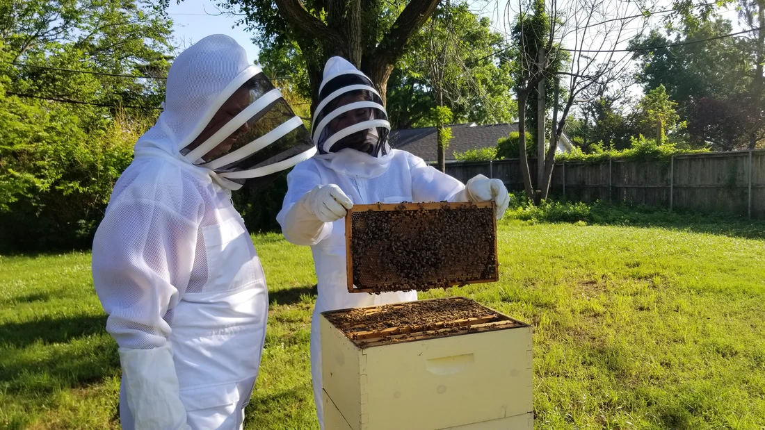 beekeepers and hive