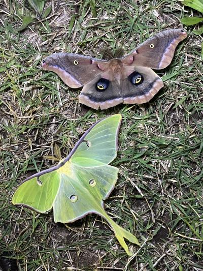 moth night bioblitz