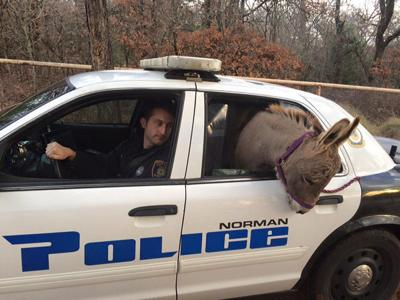 Officer puts donkey in cop car