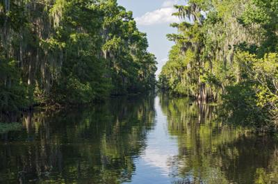 Mississippi River and Forest of Jean Lafitte National Park
