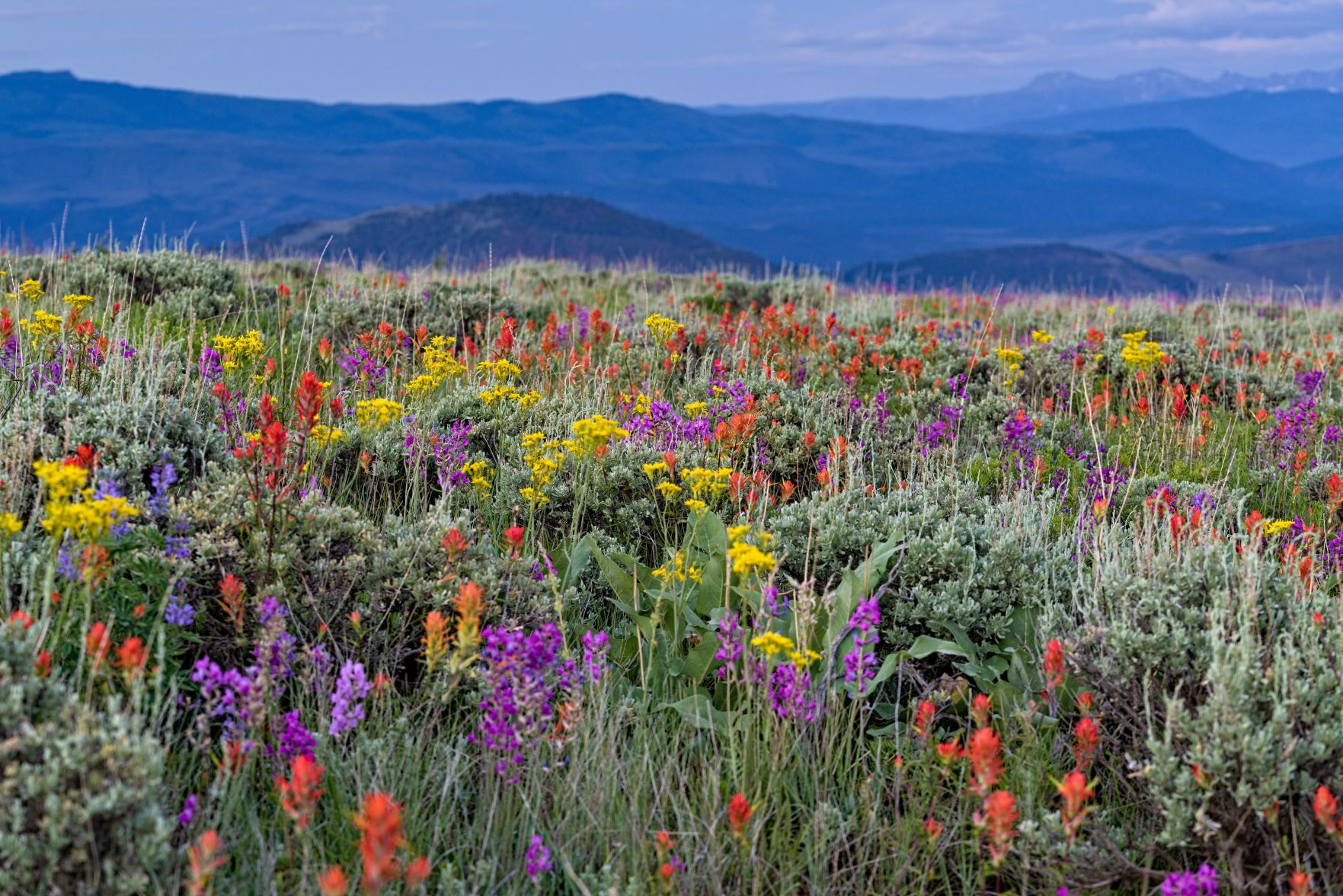 5 Best Places To Spot Wildflowers In Colorado Outthere Colorado